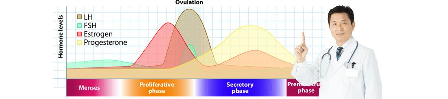生理周期のイメージ