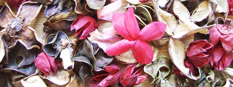 沢山の種類の花