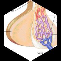 脳下垂体のイメージ