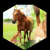 親子の馬のイメージ