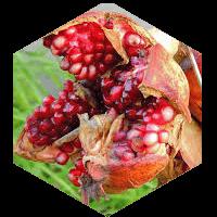 Guaranaのイメージ