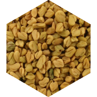 フェヌグリーク種子抽出物の画像