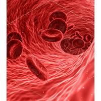 赤血球のイメージ画像